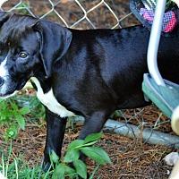 Adopt A Pet :: Michonne - Albemarle, NC