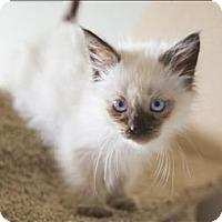 Adopt A Pet :: Zahirah - Vallejo, CA