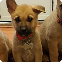Adopt A Pet :: Pepperminstix-Adopted! - Detroit, MI