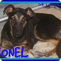 Adopt A Pet :: LIONEL - New Brunswick, NB