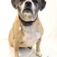Adopt A Pet :: Butler - Bradenton, FL