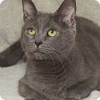Adopt A Pet :: Libby - Elmwood Park, NJ