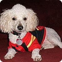 Adopt A Pet :: Lucky - Mooy, AL