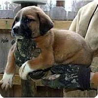 Adopt A Pet :: Brett - New Boston, NH