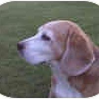 Adopt A Pet :: Farley - Phoenix, AZ
