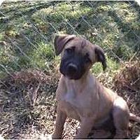 Adopt A Pet :: Dixie - Coventry, RI