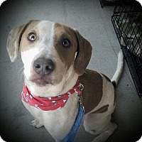 Adopt A Pet :: Rollo - Cypress, CA