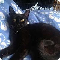 Adopt A Pet :: Casey - Merrifield, VA