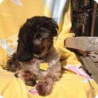 Adopt A Pet :: Poppy - LEXINGTON, KY