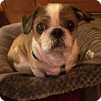 Adopt A Pet :: Stanley - Wilmington, DE