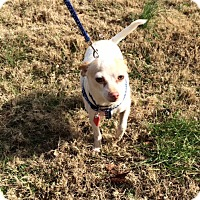 Adopt A Pet :: Benny - Arlington, TN