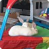 Adopt A Pet :: Ernie - Edmonton, AB