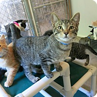 Adopt A Pet :: Hobo - Geneseo, IL