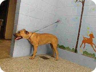 Labrador Retriever Mix Dog for adoption in San Bernardino, California - URGENT on 8/20 SAN BERNARDINO