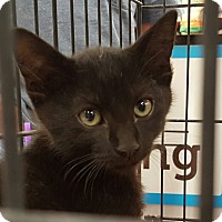 Adopt A Pet :: Cori - San Fernando Valley, CA
