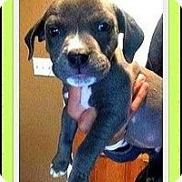 Adopt A Pet :: Two pups Left - Murrieta, CA