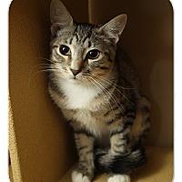 Adopt A Pet :: Frisky - Albany, NY