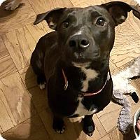 Adopt A Pet :: Joy - Savannah, GA