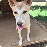 Adopt A Pet :: Kwanjai - Denver, CO