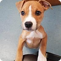 Adopt A Pet :: Eloise - Charlotte, NC