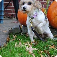 Adopt A Pet :: Cammy - Elyria, OH