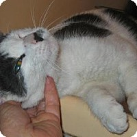 Adopt A Pet :: Boo - Brooklyn, NY