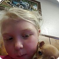 Adopt A Pet :: DASH / CHI PUPS - Gustine, CA
