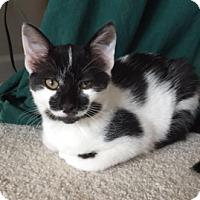 Adopt A Pet :: Raccoon - Middleton, WI