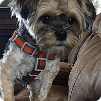 Adopt A Pet :: Riley - Toronto, ON