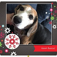 Adopt A Pet :: RASCAL - Ventnor City, NJ