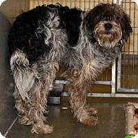 Adopt A Pet :: TOBIAS - West Valley, UT