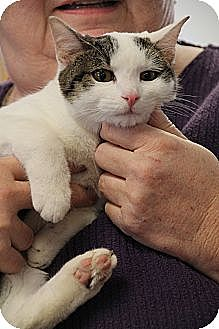 Domestic Shorthair Cat for adoption in Homewood, Alabama - Garbo