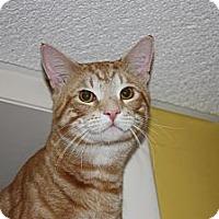 Adopt A Pet :: Finn (LE) - Little Falls, NJ