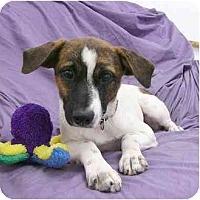 Adopt A Pet :: Corey - Mocksville, NC