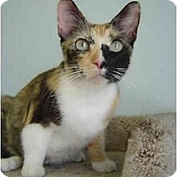Adopt A Pet :: Patches - Modesto, CA