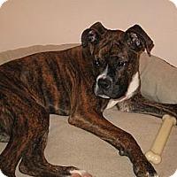 Adopt A Pet :: Hannah Marie - Dayton, OH