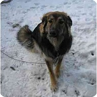 Adopt A Pet :: Balou - Rigaud, QC