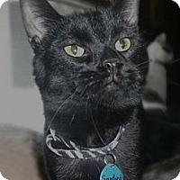 Adopt A Pet :: Sanford - Grand Rapids, MI
