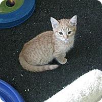 Adopt A Pet :: Frosty - Irvine, CA