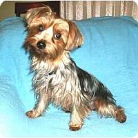 Adopt A Pet :: Priscilla - Mooy, AL