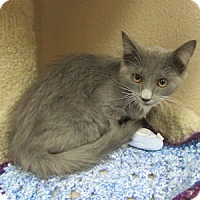 Adopt A Pet :: Piper - Gilbert, AZ