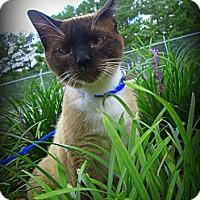 Adopt A Pet :: Hancock - Gadsden, AL