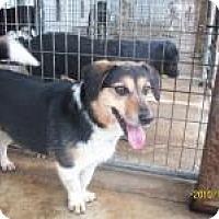 Adopt A Pet :: Tally - Farmingtoon, MO