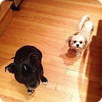 Adopt A Pet :: Posie - Chicago, IL