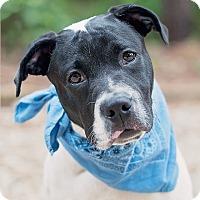 Adopt A Pet :: BW - Kingwood, TX