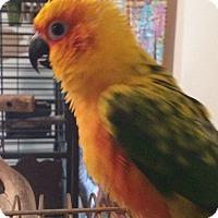 Adopt A Pet :: Cher - St. Louis, MO