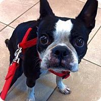 Adopt A Pet :: Roxy - Huntington Beach, CA