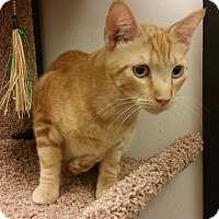 Adopt A Pet :: Cisco - Chandler, AZ