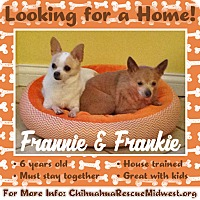 Adopt A Pet :: Frankie - st peters, MO