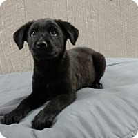 Adopt A Pet :: Roj Adoption pending - Manchester, CT
